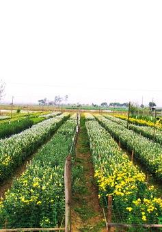 Đà Lạt đẩy mạnh phát triển làng hoa truyền thống
