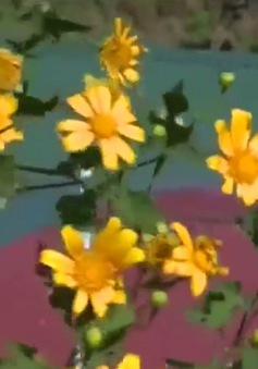 Sắc màu mùa hoa dại Đà Lạt