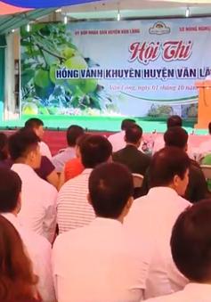 Lạng Sơn tổ chức thi kiến thức trồng hồng vành khuyên Văn Lãng