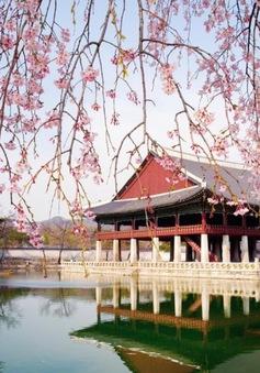 Hàn Quốc ngày càng hấp dẫn du khách nước ngoài