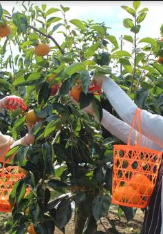 Ibaraki - Hấp dẫn trái cây tươi và ẩm thực phong phú