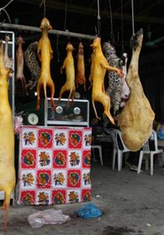 Tràn lan mua bán thịt thú rừng làm quà Tết
