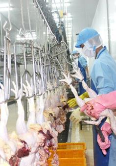 Nhật Bản chính thức nhập khẩu thịt gà của Việt Nam