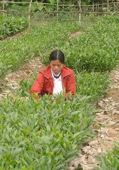 Quảng Bình quy hoạch gần 1.600ha rừng trồng gỗ lớn