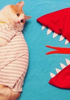 Ngắm loạt ảnh du ký siêu ngộ nghĩnh của chú mèo tại Nga