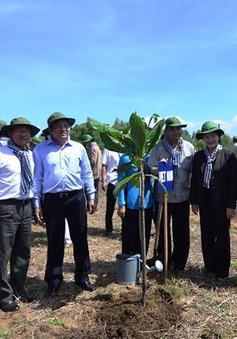 Đại biểu Liên minh Nghị viện thế giới (IPU) khảo sát rừng ngập mặn Cần Giờ