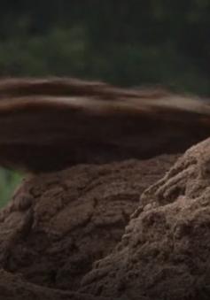Gia tăng số vụ khai thác cát trái phép tại Vĩnh Long