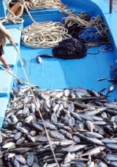 62 doanh nghiệp cam kết chống khai thác hải sản bất hợp pháp