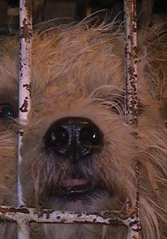 Công tác kiểm dịch chó trên tuyến Quốc lộ 1A: Lỏng lẻo