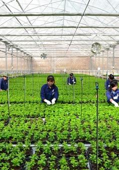 Lâm Đồng thu hút đầu tư vào nông nghiệp