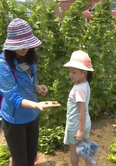 Người thành thị Trung Quốc thích thú làm nông dân dịp cuối tuần