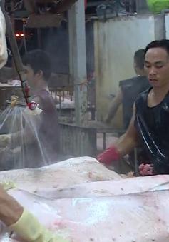 Lò mổ Xuyên Á ngừng hoạt động, thị trường thịt lợn TP.HCM gặp khó