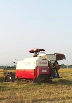 Nông dân Quảng Bình phấn khởi được mùa vụ lúa Đông Xuân