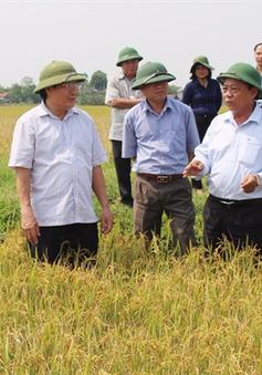 Nông dân Quảng Trị bán lúa sạch tại ruộng