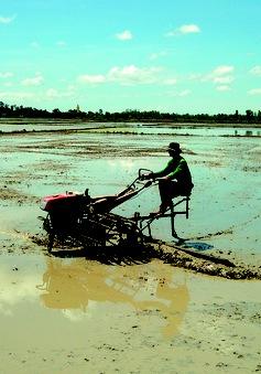Ngừng sản xuất lúa vụ 3 để đón phù sa