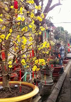 Màu vàng trong Tết Việt: Quay về miền ký ức trong trẻo của Tết xưa