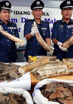 Malaysia thu giữ lượng lớn ngà voi, vảy tê tê