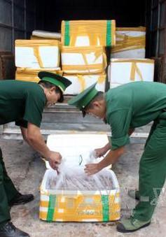Quảng Ninh: Bắt giữ gần 1 tấn cá khoai không rõ nguồn gốc