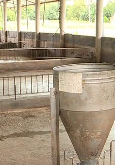 """Mưa lũ """"cuốn trôi"""" hơn 3.000 con gia súc, gia cầm ở Khánh Hòa"""