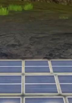 Cánh đồng thu năng lượng mặt trời lớn nhất tại Trung Quốc