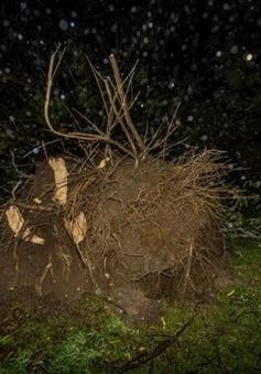 New Zealand ban bố tình trạng khẩn cấp sau bão