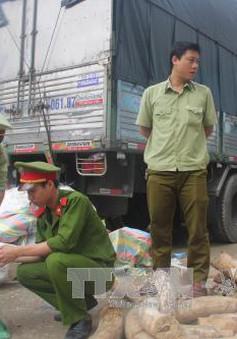 Thanh Hóa: Bắt vụ vận chuyển gần 2 tấn vật phẩm nghi ngà voi