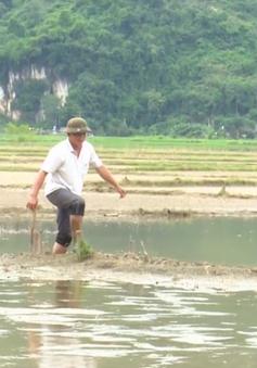 Bắc Kạn: Hàng trăm ha đất cấy lúa ngập úng, người dân lâm cảnh khó khăn