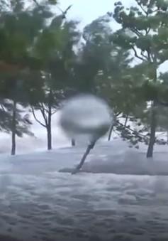 Cửa Lò (Nghệ An) tan hoang sau bão số 10