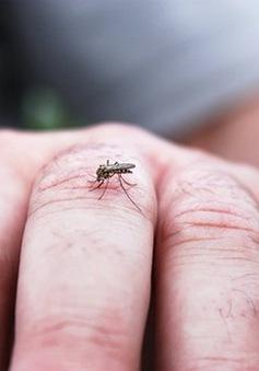 Tại sao muỗi cứ tấn công bạn mà không phải người khác?