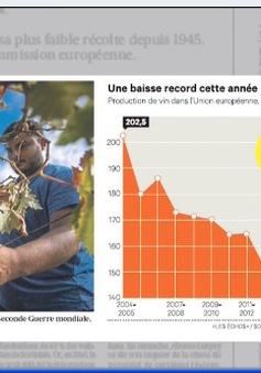 Nông dân châu Âu kết thúc vụ nho tồi tệ nhất kể từ năm 1945