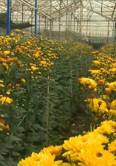 Vùng trồng hoa Thái Phiên (Lâm Đồng) được công nhận là vùng nông nghiệp công nghệ cao