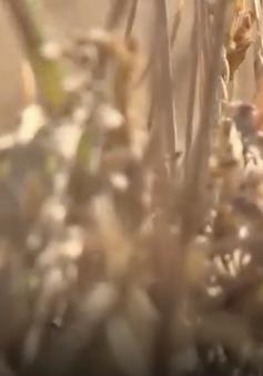 Công nghệ sinh học nông nghiệp góp phần xây dựng nền nông nghiệp bền vững
