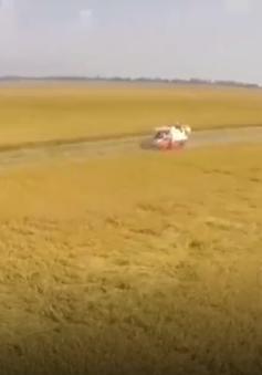 Phát triển kinh tế tập thể trong nông nghiệp