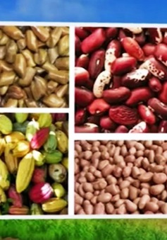 Tạm ngừng nhập khẩu 4 loại nông sản từ Indonesia