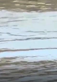Báo động số trẻ em tử vong do bị đuối nước tăng