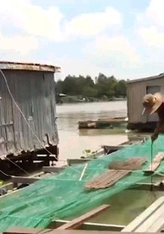 Hiệu quả mô hình nuôi cá lồng bè trên sông biên giới