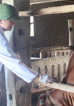 Xuất hiện thêm ổ dịch lở mồm long móng tại Nghệ An