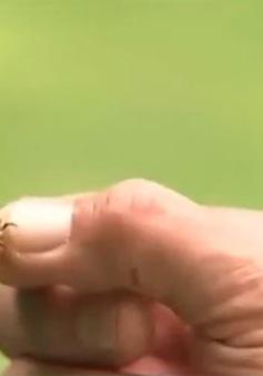 Bùng phát tình trạng ăn trộm mật ong tại New Zealand