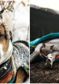 Cặp chó mèo rủ nhau đi khắp thế gian khiến ai cũng thấy thích thú