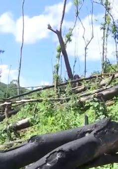 Vụ phá rừng Tiên Lãnh: Yêu cầu huyện Tiên Phước làm rõ trách nhiệm từng đơn vị, cá nhân