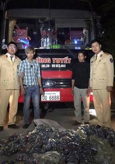 Bắt giữ gần 28.000 quả pháo bi trên xe khách từ Lào về Việt Nam