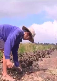 Nông dân giãn vụ để phục hồi đất