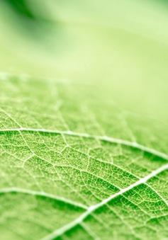 Cấu trúc gân lá có thể giúp tăng thời lượng pin
