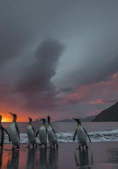 Điều kỳ diệu của thế giới tự nhiên trong các bức ảnh ngoạn mục