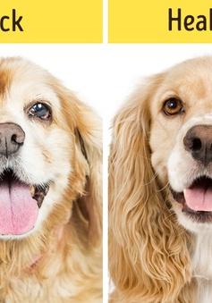 12 dấu hiệu cho thấy thú cưng nhà bạn cần gặp bác sĩ ngay lập tức