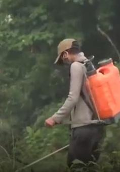 Quảng Trị: Nguy cơ ô nhiễm nguồn nước từ thuốc diệt cỏ