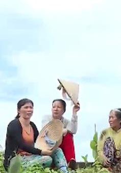 Miền quê của những phụ nữ hạnh phúc