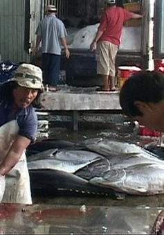 Tổ chức hội nghị đánh giá chuỗi sản xuất cá ngừ tại Phú Yên