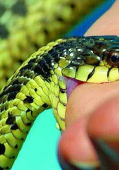 Mùa mưa lũ, số bệnh nhân bị rắn độc cắn tăng mạnh