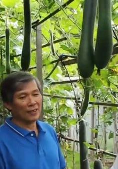 Những vườn rau thuần Việt tại Ba Lan